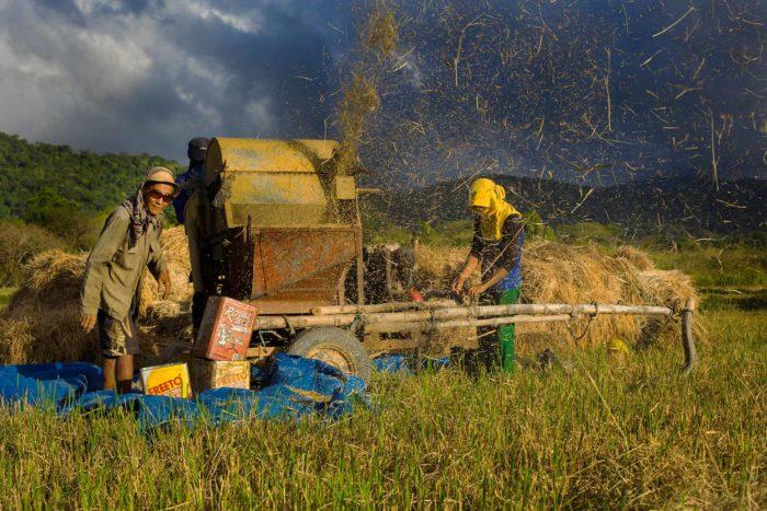 68-rice-threshing,-philippines-