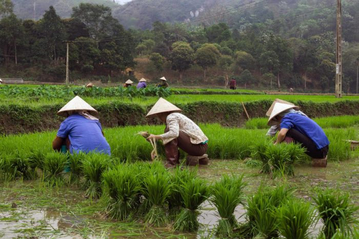 107-workers-at-rice-paddies,-lao-cai-vietnam