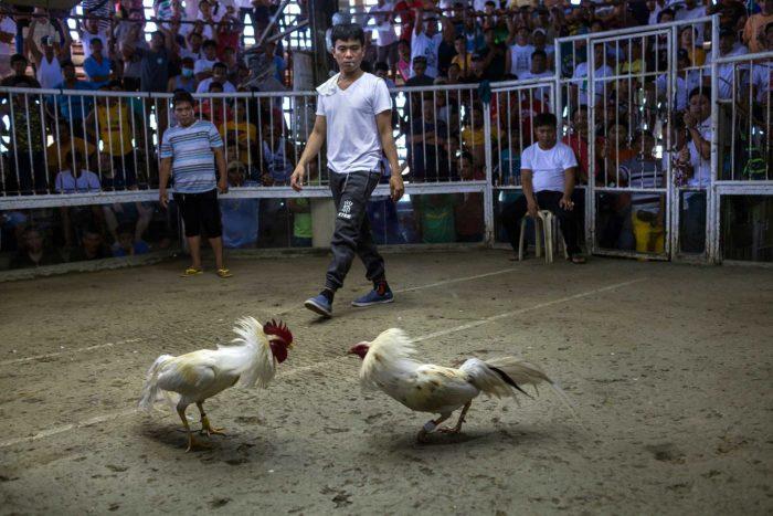 11-cock-pit-arena,-calapan-mindoro---copyright-salv