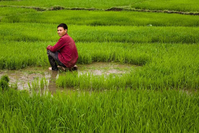 105-worker-at-rice-paddies,-lao-cai-