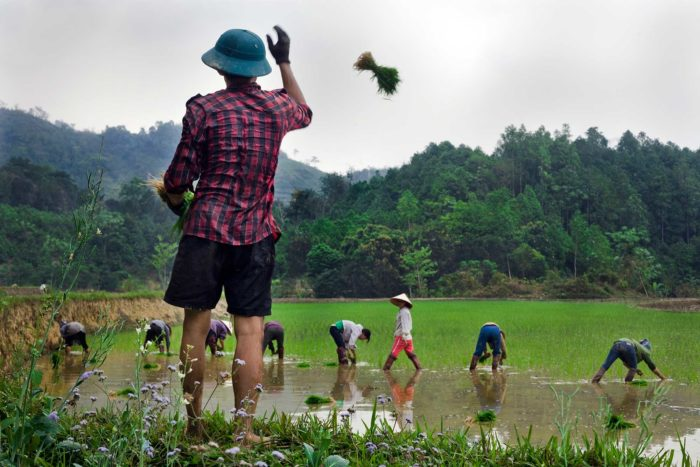 108-workers-at-rice-paddies,-lao-cai-vietnam